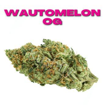 GT Wautomelon OG 8th (THC 21.7%)