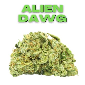 GT Alien Dawg 8th (THC 21.69%)
