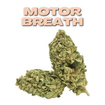 GT Motor Breath 8th (THC 25.14%)